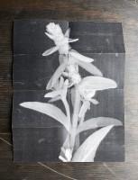 http://millatoukkari.com/files/gimgs/th-52_IMG_6167_muok_crop_p_hp.jpg